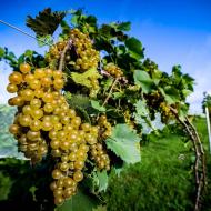 Native Trails Wine Run 5k