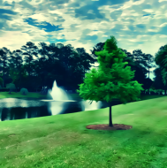 Virtual Run for South Carolina Native Trees