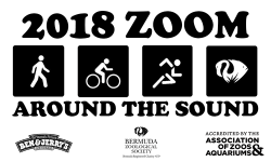 Zoom Around the Sound 2018
