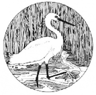 Snowy Egret Virtual 5K Run/Walk