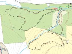 Salt Springs Field, Forest & Falls Trail Race