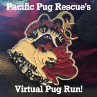 Pacific Pug Rescue's Virtual Pug Run