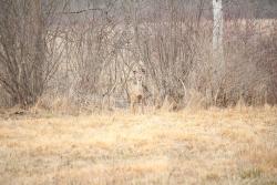 Audubon's Wild 5K
