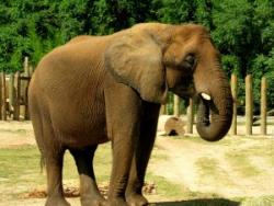 HEB Zoo Stampede