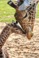 H-E-B Cameron Park Zoo Stampede