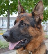 Virginia German Shepherd Rescue 5 Mile Run/Walk & 1 Mile Fun Run/Walk