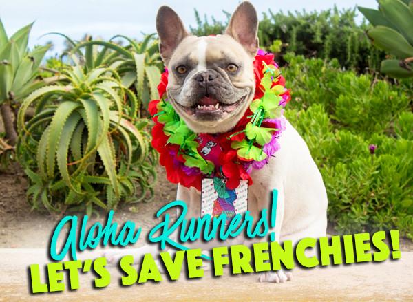 Virtual Frenchie Run - Benefitting The French Bulldog Rescue
