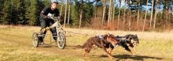 Down East Sled Dog Wesbrook Sunset Ridge Dryland Challenge