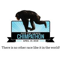 Chimpathon 16K