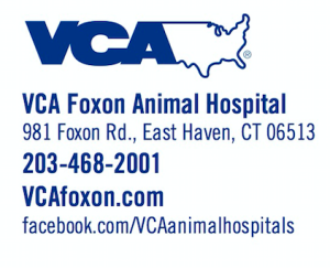 VCA Foxon Animal Hospital