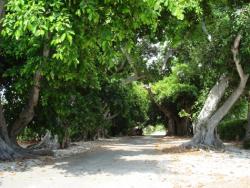 19th Annual Boca Grande 5k
