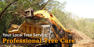 R. Moore & Associates Tree Experts