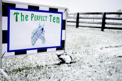 THE PERFECT 10 at Mt. Brilliant Farm