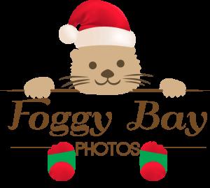 Foggy Bay Photos
