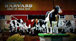 Harvard Milk Days