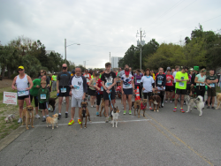 17th Annual Run with the Dogs 5k