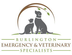 Burlington Emergency & Veterinary Specialists