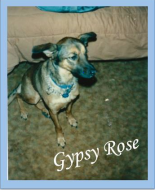 Gypsy Rose Animal Foundation 5K