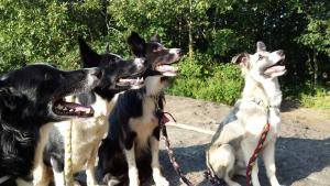 DAHLONEGA ACTION DOGS