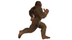 Chasing Bigfoot 5k Trail race