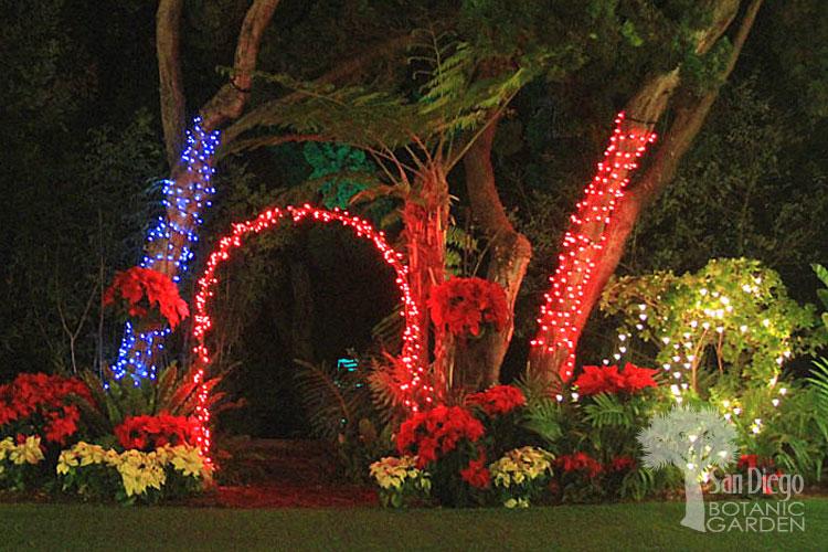 San Diego Botanical Garden Christmas Lights 2021 San Diego Botanic Gardens Of Lights