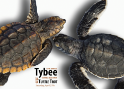 16th Annual Tybee Turtle Trot 5k Beach Run