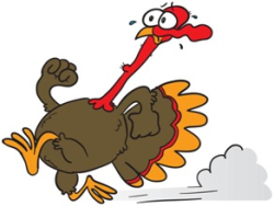 Moulton Turkey Trot