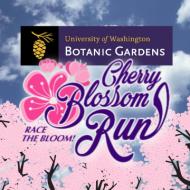 UW Cherry Blossom Run