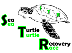 Sea Turtle Race