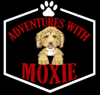 Moxie's Mission: 6 legged Relay Fun Run @ Bar K Dog Bar
