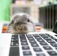 The VIRTUAL Bunny Boogie