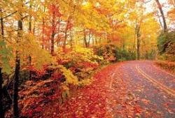 Pocono Half Marathon & Fall Running Spectacular