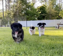Moving for Mutts 5k Virtual Run