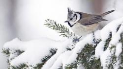Snow Bird Challenge