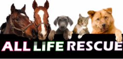 All Life Animal Rescue