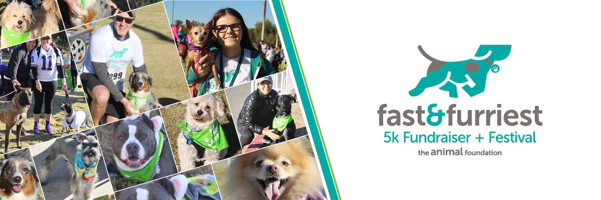 Fast & Furriest 5K and Festival Banner Image