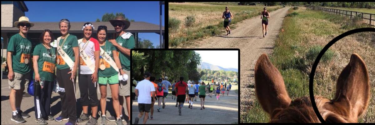 Mancos Half Marathon, 5K, and Fun Run Banner Image