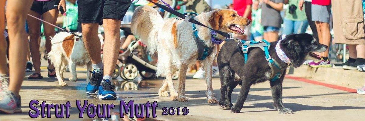 2019 Strut your Mutt 1 Mile Wag Walk Banner Image