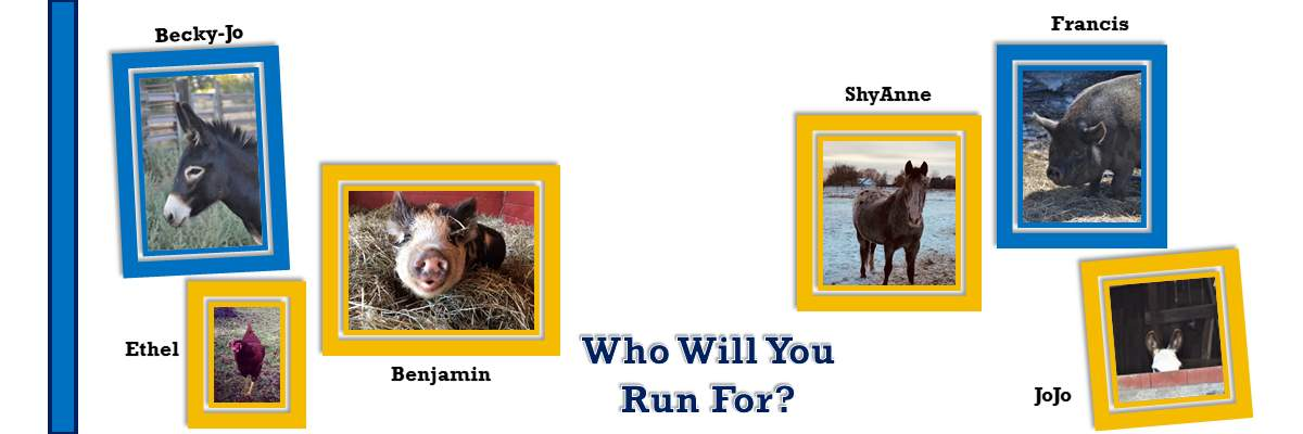 Run for the Animals Banner Image