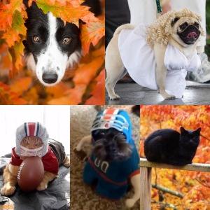 Fall 2020 PALS Pet Cotillion Voting
